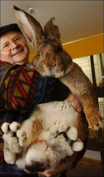 a big bunny rabbit